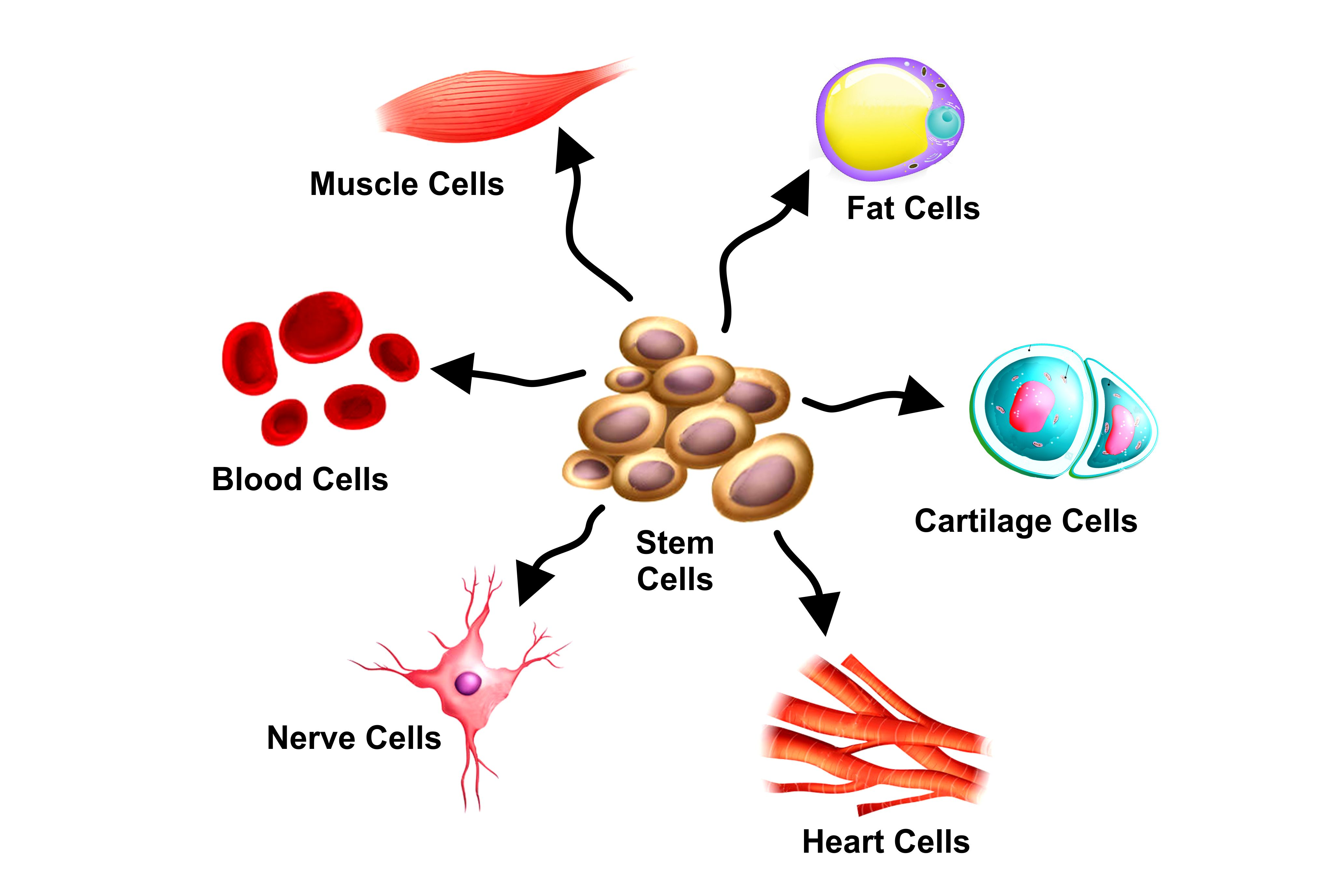 Stem Cell Treatment For Autism Stem Cell Treatment in Autism