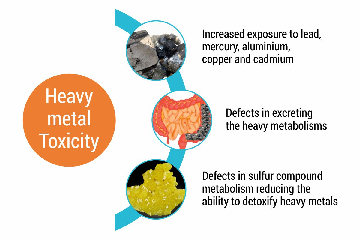 Heavy metal Toxicity, What Causes Autism, Autism Connect