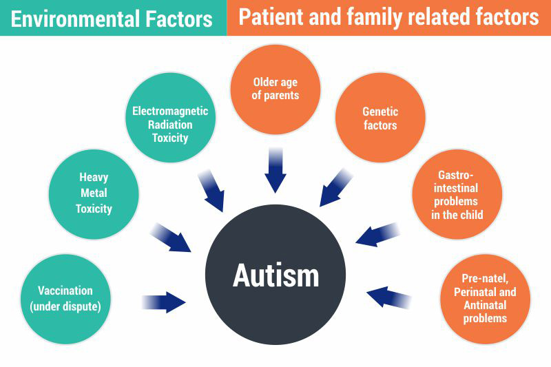 What Causes Autism Causes of Autism Autism Connect