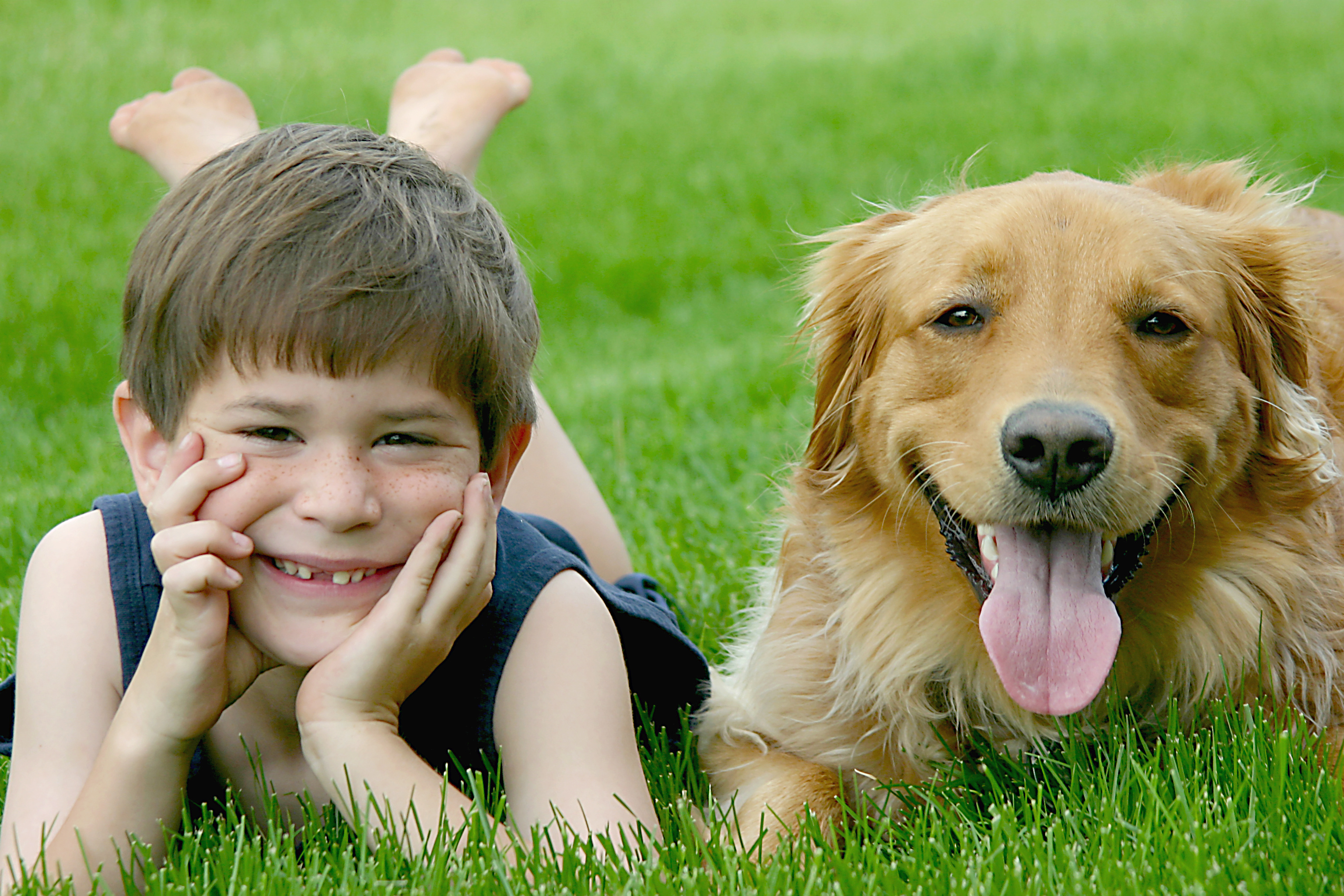Animal Assisted Therapy, Complimentary Therapy For Autism, Autism Connect